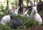 致那些年,我们一起养兔的青春!