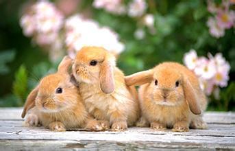 长毛兔为啥啃撕身上的毛